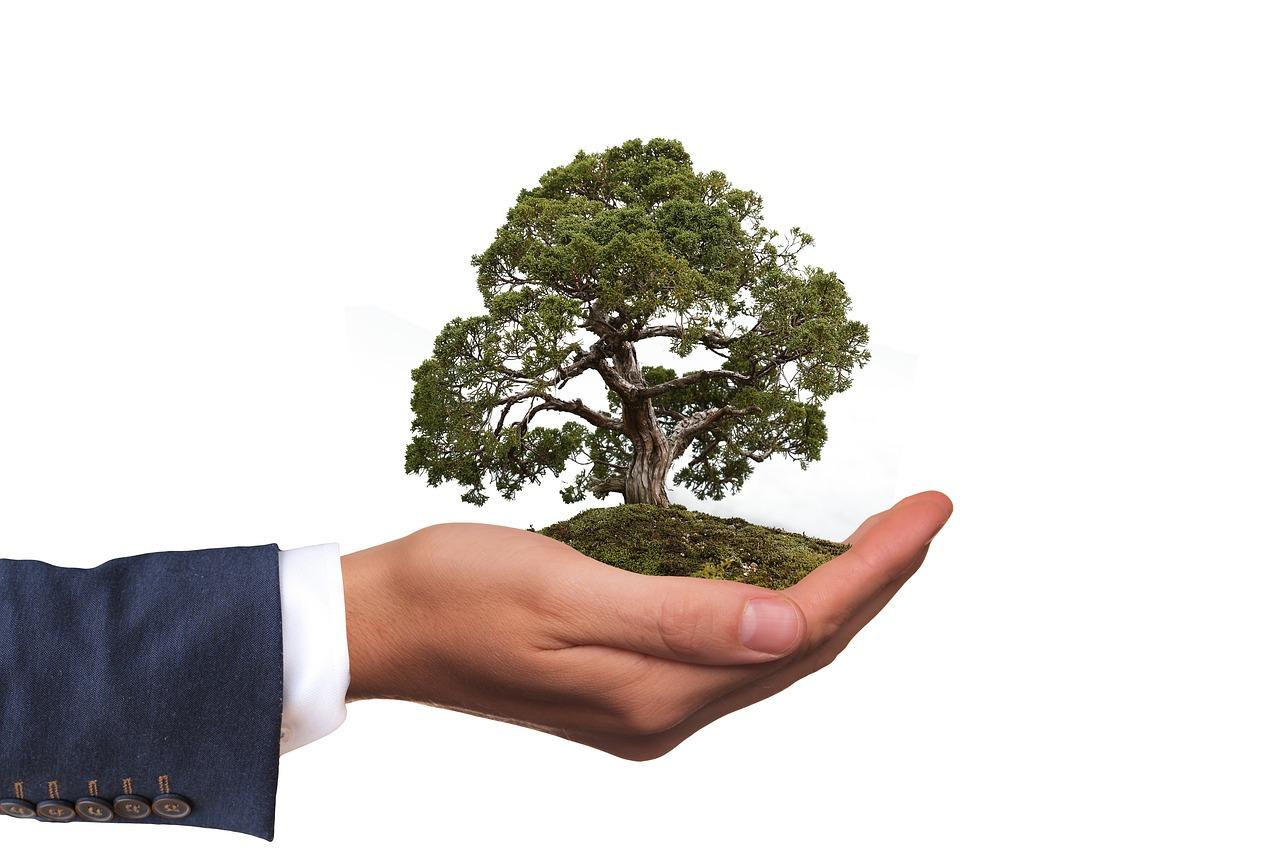 Publicado decreto que converte multa ambiental em prestação de serviços