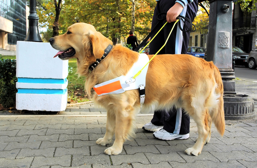 Comerciante é condenado por impedir entrada de cães-guias e seus donos em restaurante