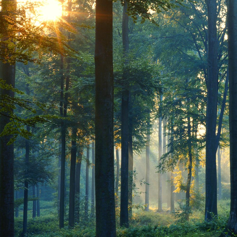 O Código Florestal ou a Lei de Parcelamento do Solo Urbano